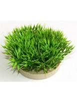 Sydeco - Green Moss - Изкуствено аквариумно растение - 7 см.