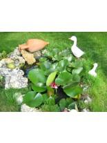 "Изграждане на Езерце - ""Водна градина"""