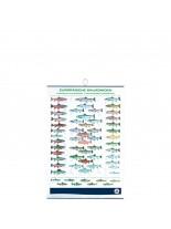 FIAP profifan European Salmonids - европейски сьомгови риби - 99.0 х 70.0 х 1 см.