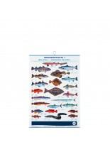 FIAP profifan Sea Fish - Популярни морски риби - 99.0 х 70.0 х 1 см.
