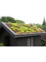 Изграждане на Зелени - ЕКО покриви