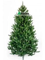 Коледна елха Alpina Натурален Смърч - 150 см.
