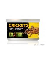 Exo Terra - Crickets - онсервирани щурци за влечуги и земноводни - 34 гр.