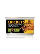 Exo Terra - Crickets XL - консервирани щурци / големи /  за влечуги и земноводни - 34 гр.