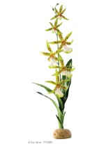 Exo Terra - Spider Orchid - горско декоративно растение за терариум