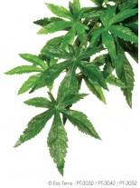 Exo Terra - Abuliton Large - висящо терариумно растение