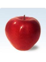 Ябълка сорт Глостер - 1.50 - 2.00 м.