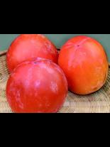 Райска ябълка сорт Каки Типо-Kaki Tipo - 1.20 - 1.80 м.