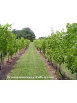 Тревна смеска - Смеска за мулчиране за лозя и овощни градини- 1  kg