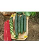 Краставици - Гергана - 2 гр. - около 35 семена в 1 гр.
