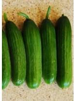 Краставици - Бета Алфа F1 (средноплодни) - 1 гр. - около 35 семена в 1 гр.