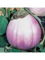 Пталаджан - Бял с розова сянка - 1 гр.