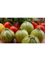 Тиквички - Раун де Найс (кръгла, бяла) - 3 гр