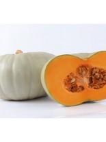 Тиква - Пловдивска 48/4 - 5 гр.