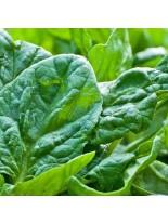 Спанак - Едър зимен - 50 гр.