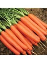 Моркови - Нантски - 5 гр.