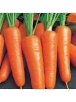 Моркови - Роял Шантене - 5 гр.
