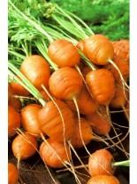 Моркови - кръгли - 3 гр.