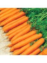 Моркови - Амстердам - 5 гр.