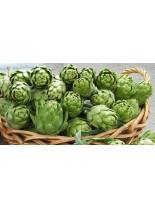 АРТИШОК - Грийн глоуб - 1.5 гр