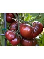 Домати - Черни - 0.5 гр. - около 130 - 170 бр. Семена