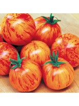 Домати - Тигерела - 0.5 гр. - около 130 - 170 бр. Семена