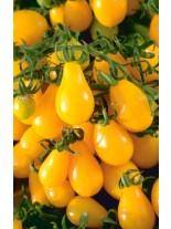 Домати - Чери - Жълт крушовиден  - 0.5 гр. - около 120 - 160 бр. Семена