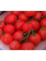 Домати - тип Чери - Гарденерс Делайт (изключително вкусен) - 0.5 гр. - около 120 - 160 бр. Семена